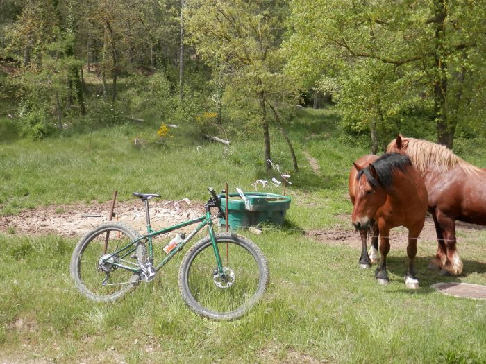 Right side of a Surly Krampus bike leaning on a fence in the grass with two horses in a woody pasture