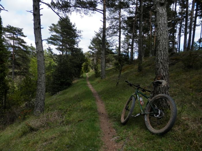 Left side of Surly Krampus bike from behind leans against a pine tree facing down a narrow trail across a hill in woods