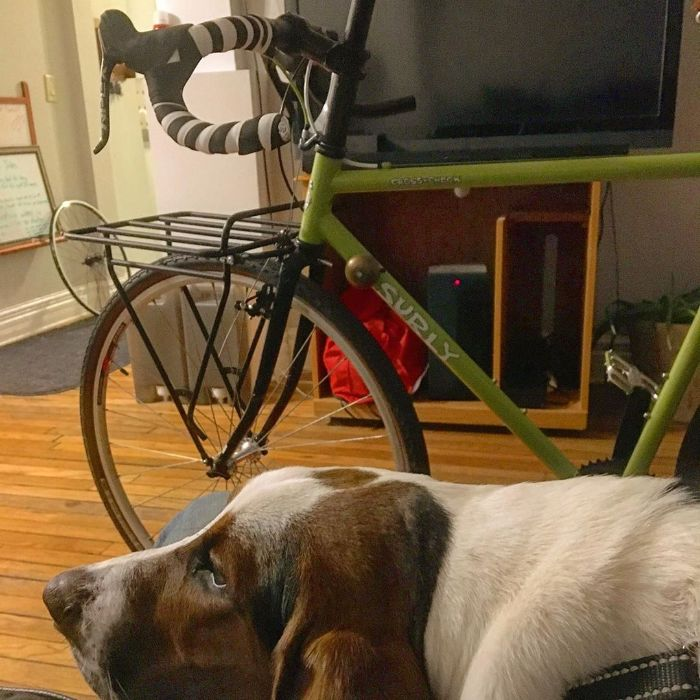A basset hound lays on a wood floor with a green Surly bike in front of a TV