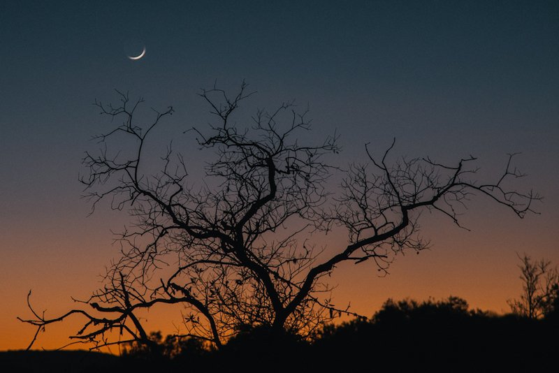 A wide, leafless tree with a setting sun in the horizon and a fingernail moon in a clear sky