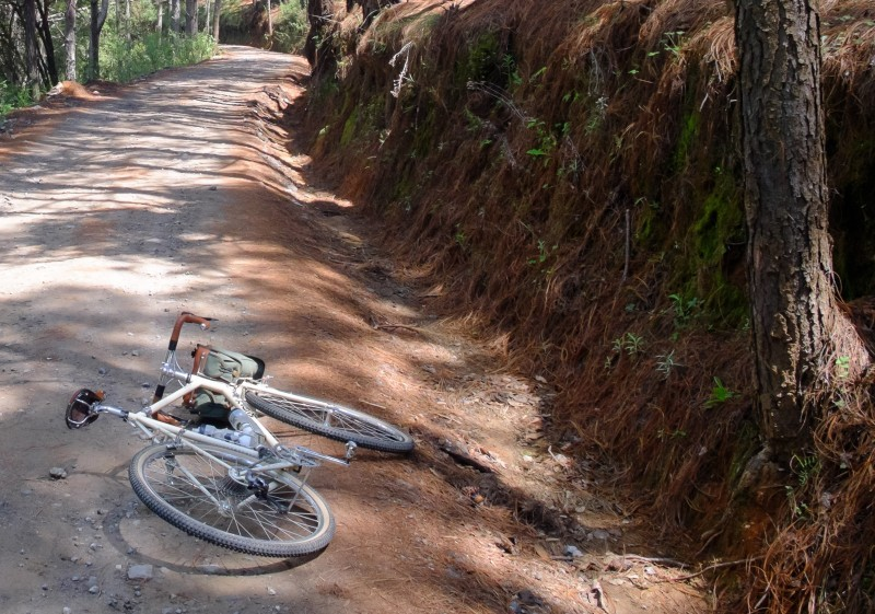 Rear view of a bike laying on it's left side, facing down a dirt road in a forest