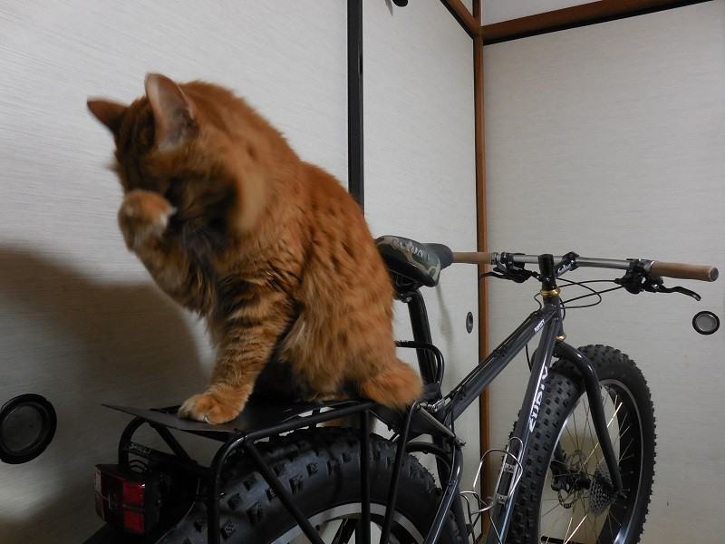 Rear, right side view of a black Surly Pugsley bike, with a cat on the rear rack, in a small room