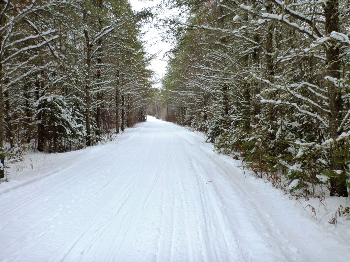 Straight away view of a wide, snow covered trail running through a snowy forest