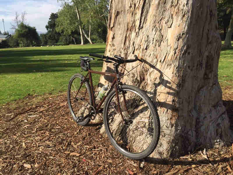 Front right side view of a brown Surly Cross Check bike, parked against a large tree in a green grass field