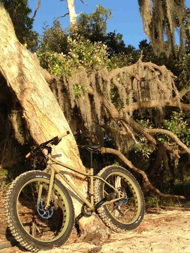 Left side view of a tan Surly Pugsley fat bike, parked on sand, leaning on a tree with Spanish moss hanging from it