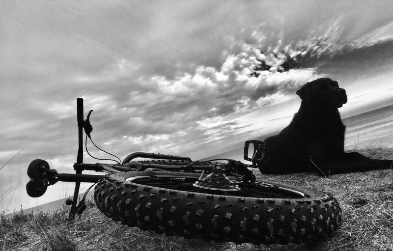Rear ground level view of a Surly fat bike laying on it's left side in grass, with a black lab dog laying next to it