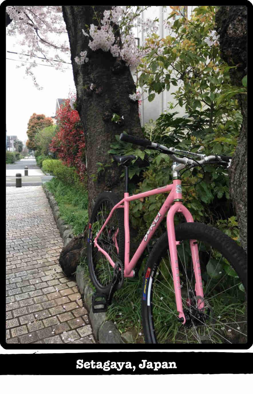 Front left view of a Surly Karate Monkey bike, pink, in the weeds alongside a sidewalk - Setagaya, Japan tag below image