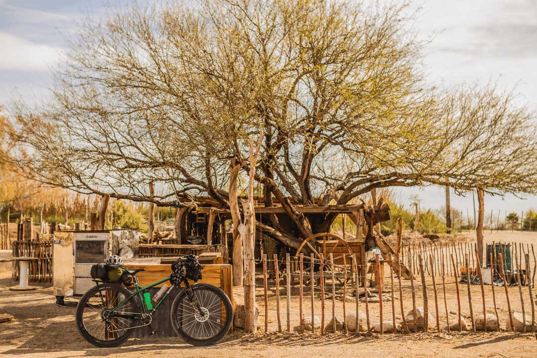 Right side view of a Green Surly fat bike next to a spindly fence in front of tree growing through a desert shack