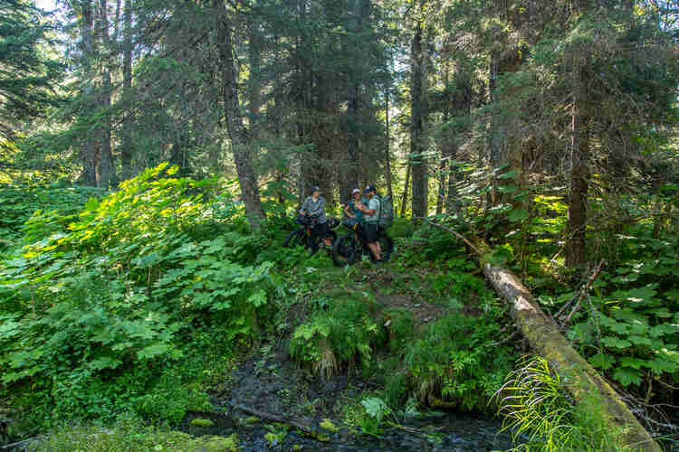 Three cyclists standing in the forest with their fat bikes