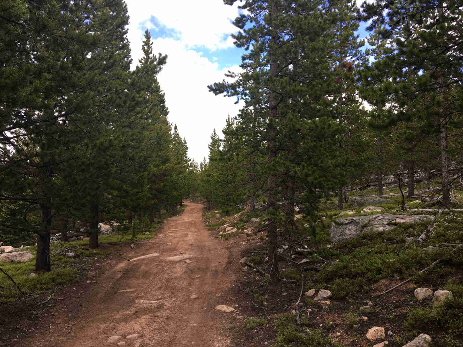 View down a dirt trail between pine trees