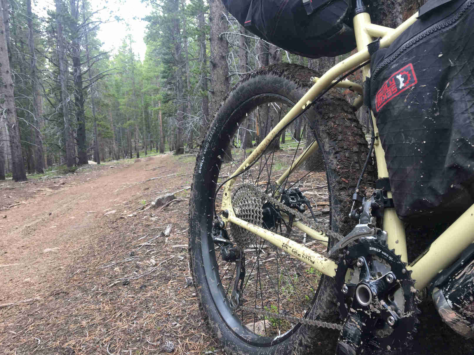 Back end of a Surly ECR bike on the the side of a dirt trail in a pine forest