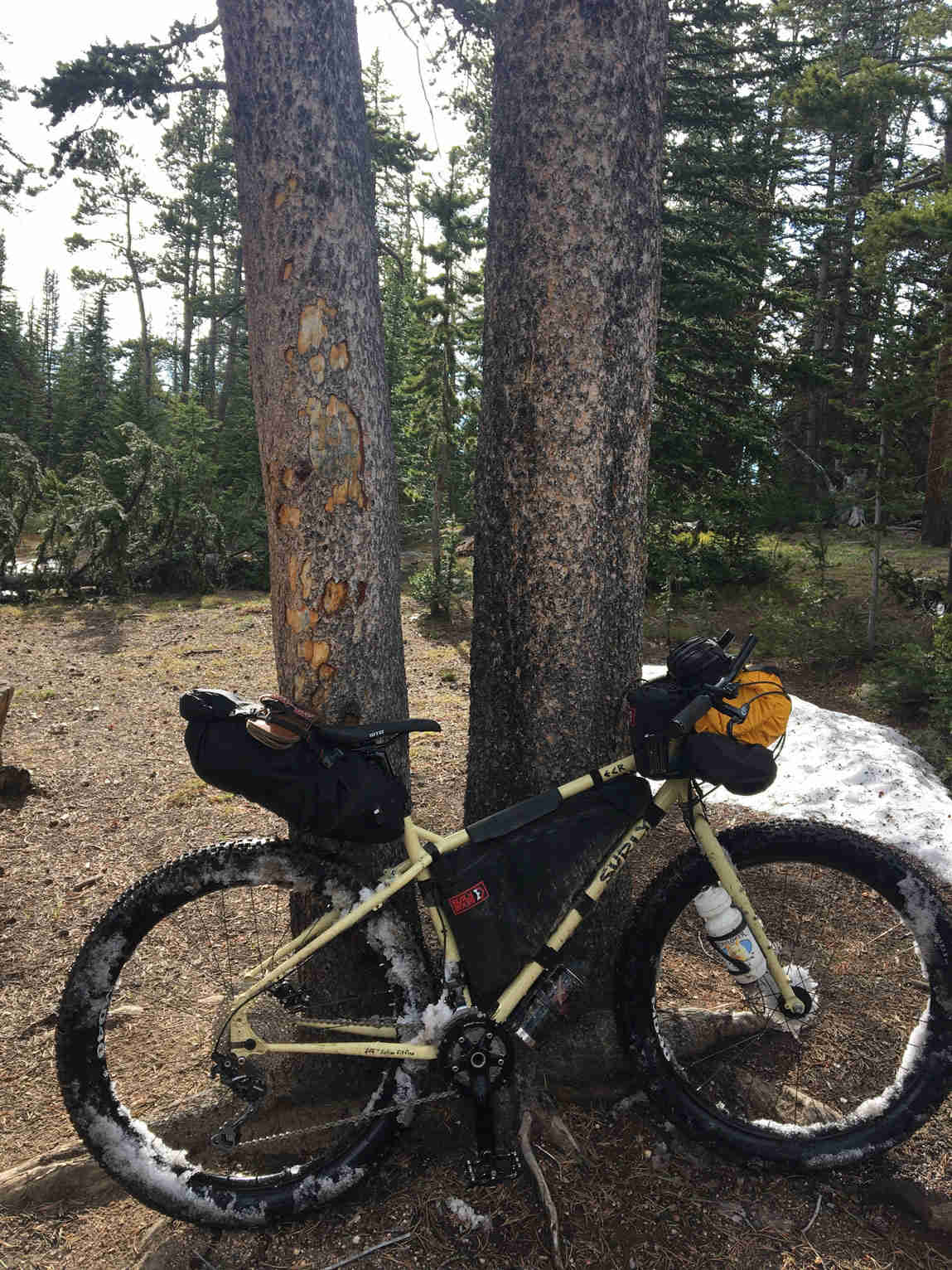 Right view of a Surly ECR bike, full of gear, leaning on 2 trees, with the forest in the background