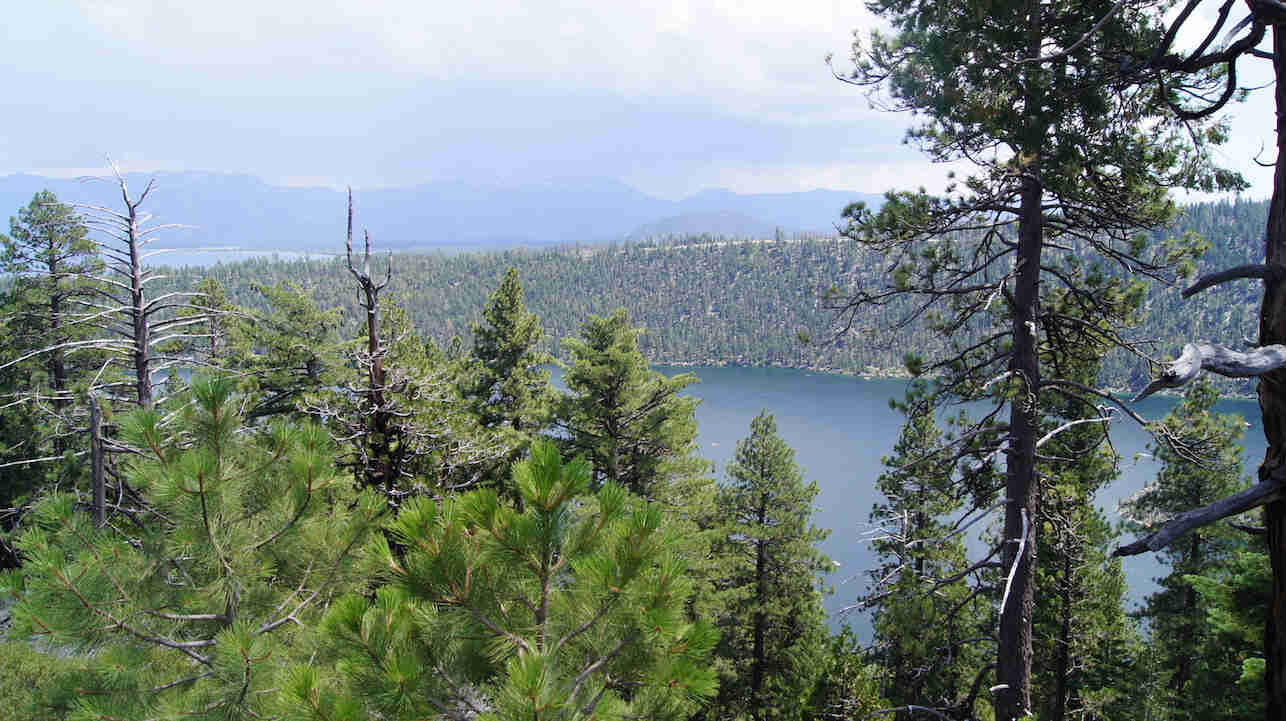 View looking over the top of pine trees, with a lake surrounded by trees down below