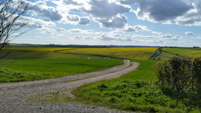 A gravel road in the middle of a grassy field and blue sky with clouds above