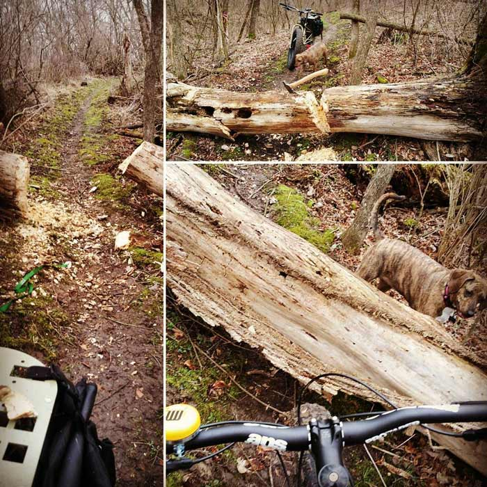 Three sections showing a fat bike on a trail in the woods with downed tree across a trail with a dog next to the tree