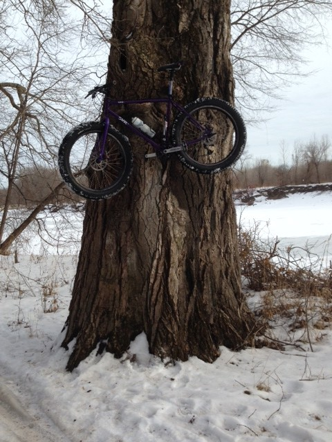 Left side view of a purple Surly Pugsley fat bike, mounted up on a tree trunk, with snowy woods in the background