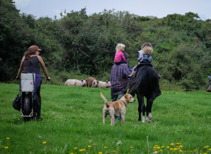 A rear view of a cyclist riding a Surly Big Fat Dummy bike, in a field, next to children on a horse, an adult and a dog