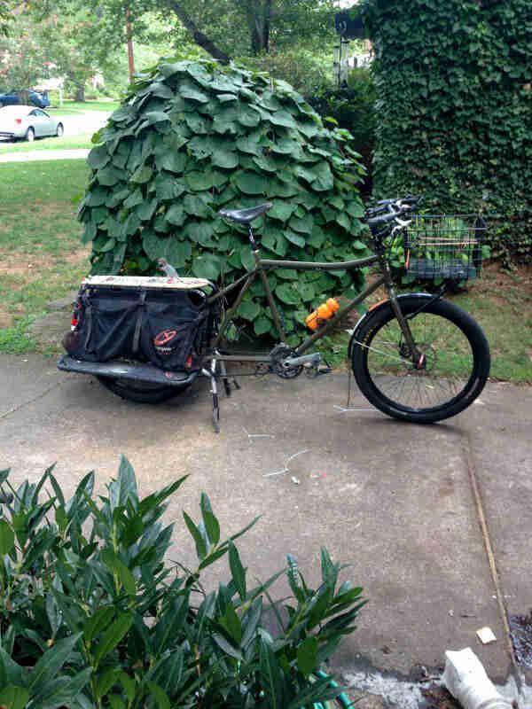 Right side view of an olive Surly Big Dummy bike, parked on a driveway in front of a bush