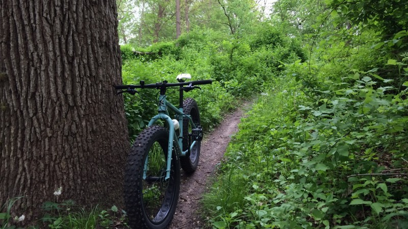 Front view of a Surly Wednesday MY17 fat bike, mint, parked next to a large tree, on a narrow dirt trail in the woods