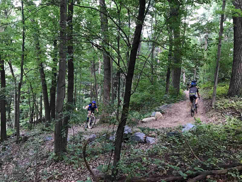 Cyclists riding up a hill around a curve on a dirt trail in the woods with green leaves
