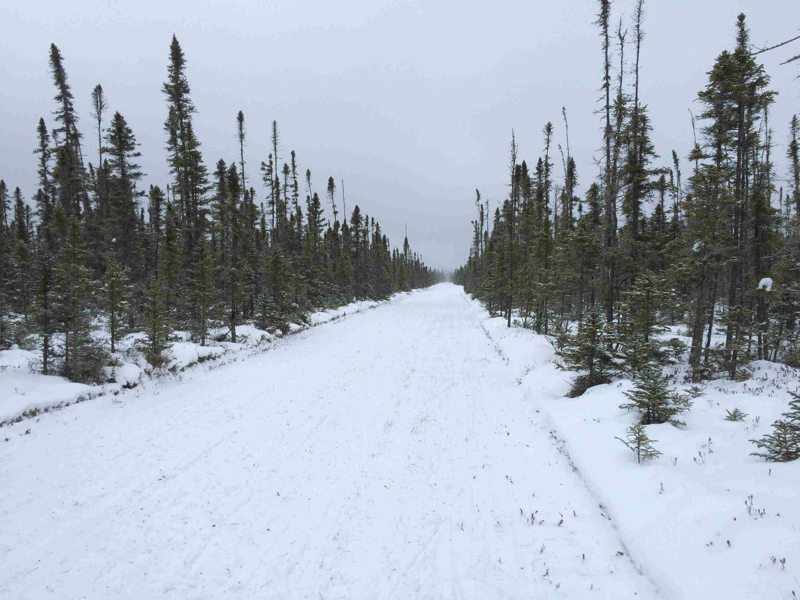 View facing straight down a snow covered road with pine trees on the sides