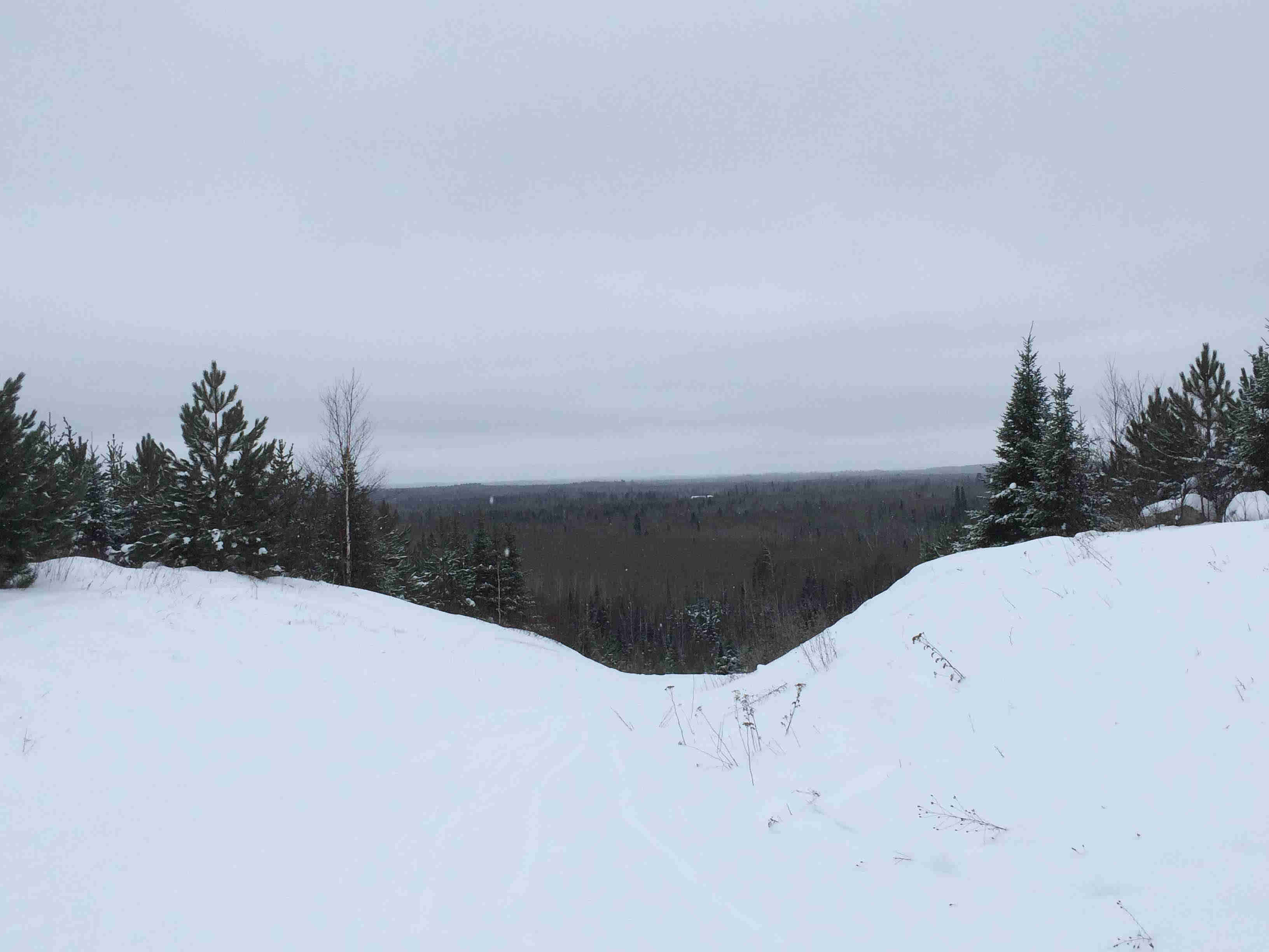 A view from the top of a snow covered hill overlooking a pine forest