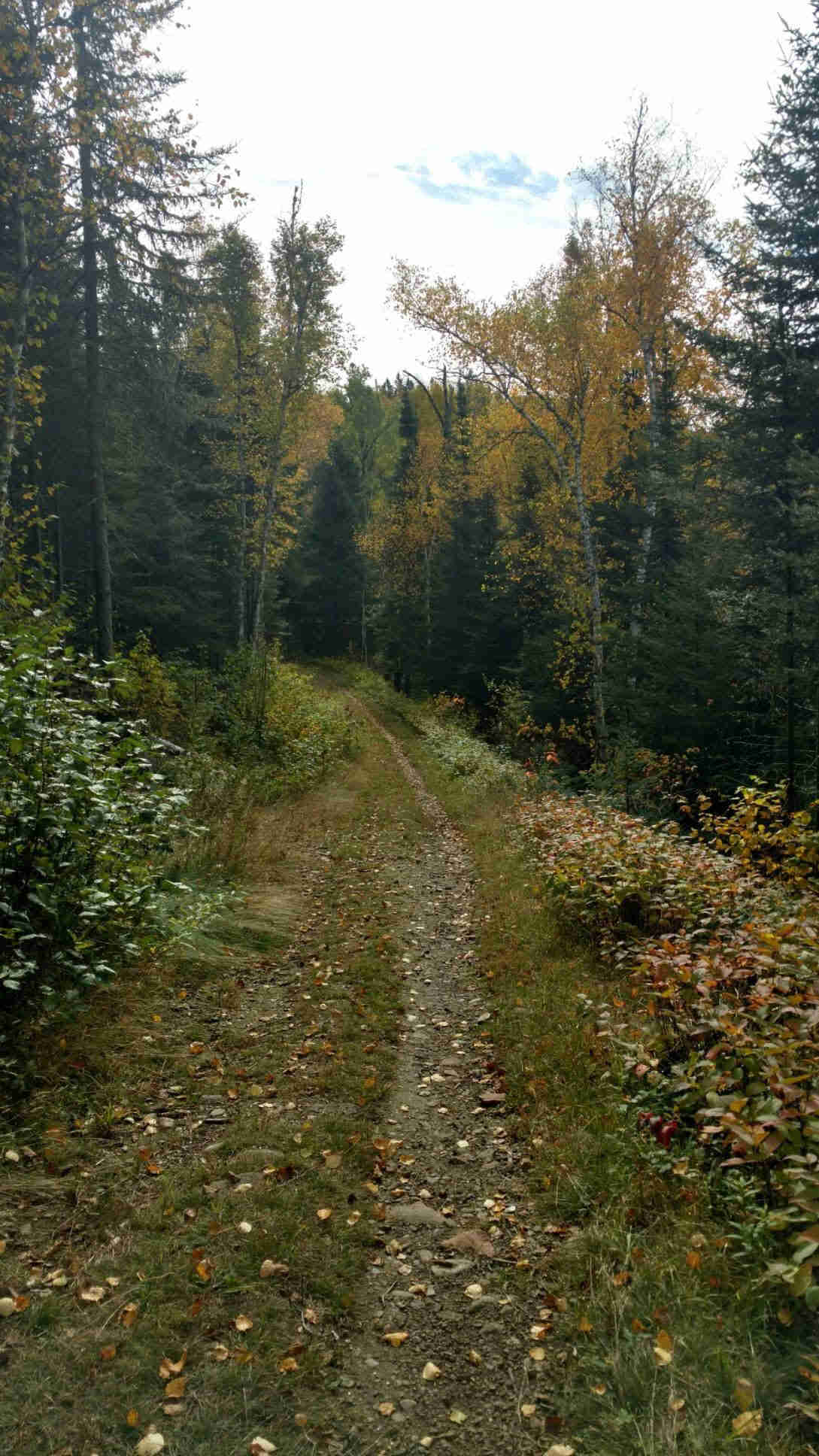 View of narrow grass trail leading into the trees