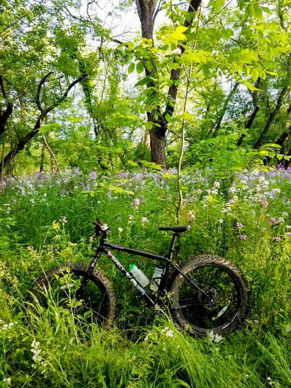 Left side view of a Surly Ice Cream Truck fat bike, black, parked in tall weeds in a forest
