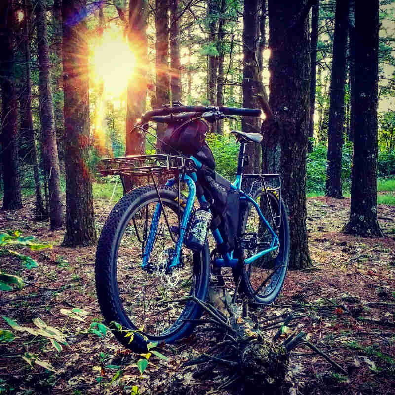 Front left side view of a Surly bike, blue, parked on a forest floor, with sun shining through trees in the background