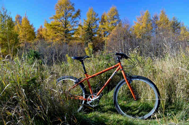 Right side view of an orange Surly Troll bike, standing in tall weeds, and trees with yellow leaves in the background