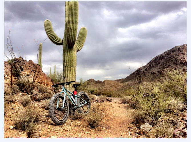 Front view of a Surly Wednesday MY17 fat bike, parked rocks in front of large cactus, next to a trail in a brushy desert