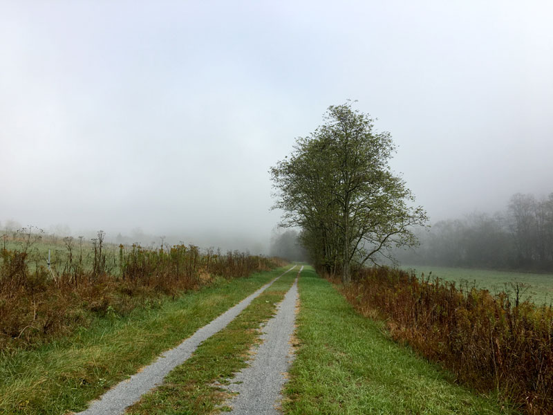Farm field road heading into the trees on a foggy day